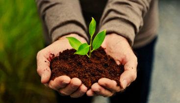 Convocatoria pública de subvenciones para el desarrollo de actuaciones orientadas a la mejora de la calidad ambiental